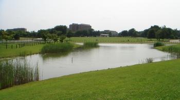 2武蔵野森公園.jpg