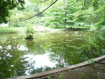 小金井公園池.jpg