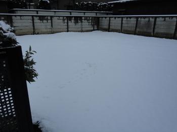 我が家の庭、雪.JPG