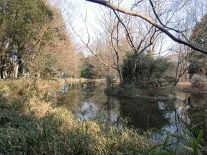 小金井公園池2.jpg