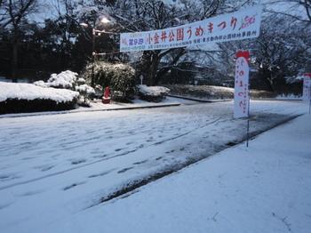 雪の梅まつり.JPG